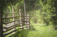 Rustic fence and alley with green grass and sunlight