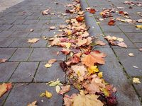 Fallen leaves lying on the paved surface near the curbstone