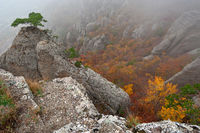 Rocks and autumn forest