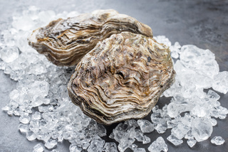 Fresh rock oyster offered as closeup on crushed ice with copy space
