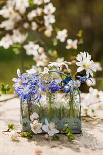 Spring blossoms in little bottles