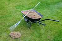 raking dead grass from the lawn after winter