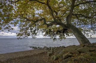 Der Baum am Meer