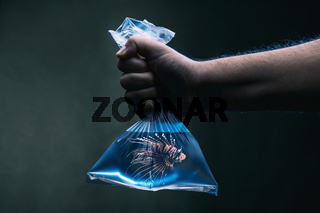 Swimming lionfish in a plastic bag filled with clean blue water under water scene. Environmental pollution
