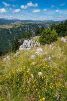 Summer Tara Canyon in mountain Durmitor National Park, Montenegro