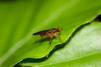 Macro einer Fliege, Insekt
