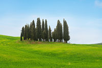 Beautiful spring minimalistic landscape with Italian Cypress in Tuscany