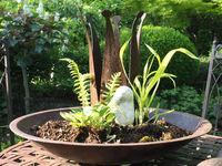 Miniaturgarten in der Schale