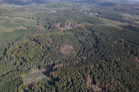 Schwer geschädigte Fichtenwälder