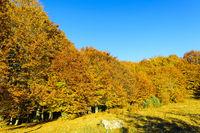 Herbstlaub bei Lacul Sf. Ana