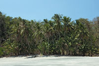 tropical palm beach on the cebaco island panama