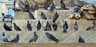 Tauben in der Stadt