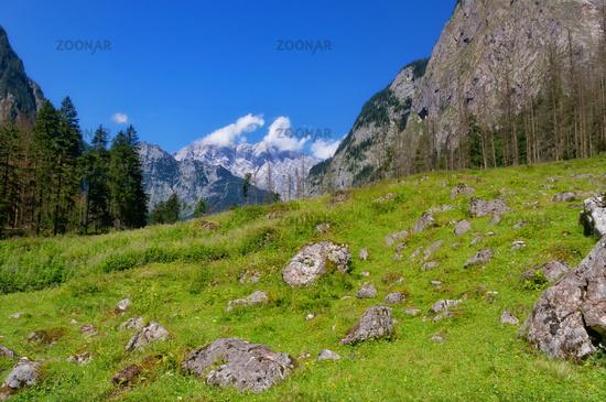Naturimpression am Obersee