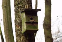 Nistkasten an einem Baum im Wald