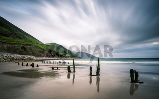 Old poles of a ruined jetty at rossbeigh beach kerry ireland
