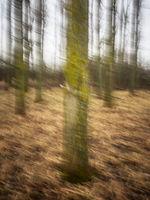 Baum im Wald mit Wischeffekt