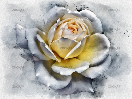 watercolor painting of a large white rose with glowing yellow center