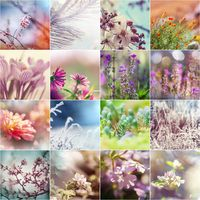 Flowers collage