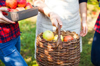 Lovely women in a sunny apple garden