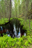 Still water river in forest at summer day