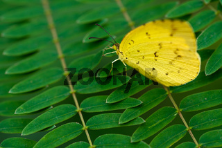 Yellow butterfly on fern leaves