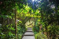 Wooden path in Taman Negara national park, Malaysia