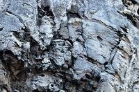 Bryozoan limestone