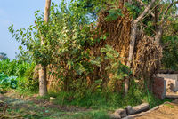 Exotic bamboo rocked hut and by tropical green trees and grass at traditional Egyptian village