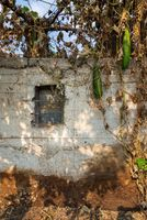 Abandoned exotic white stone bricks wall with single rusted iron window and tropical withered plants