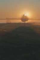 Sun rising above field flooded with fog