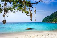 Hanging coral on Turtle Beach, Perhentian Islands, Terengganu, Malaysia