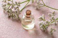 A bottle of valerian essential oil and fresh valerian twigs