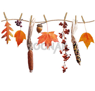 Autumn composition on white background