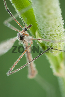 Insect covered in morning dew macro