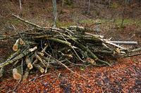 Holzhaufen im Wald für Zerhäckselung zu Hackschnitzel