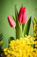 Spring bouquet with tulip and mimosa