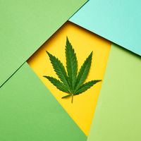 Marijuana leaf on a paper colored frame background.