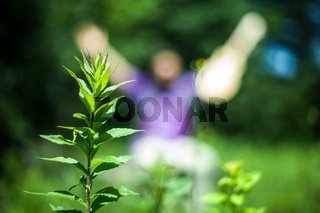 man raising his hand with plant