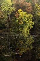 Herbstzeit am Großen See