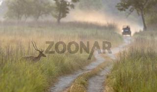Misty morning at Dhikala, Corbett, India