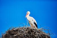 Ein Storch in seinem Nest