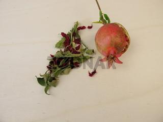 Getrocknete Granatapfelblüten, Granatapfelblätter und ein kleiner Granatapfel
