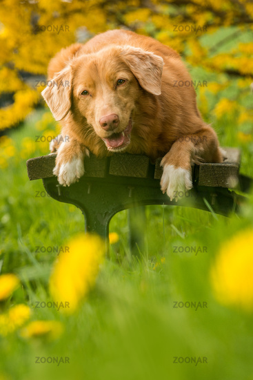 Dog on a park bench