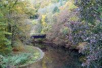 Herbstlicher Wald an der Wied nach der Wassermühle am Laubach