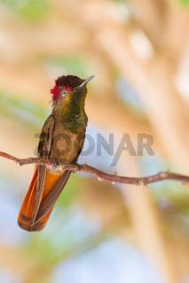 Hummingbird sitting on tree branch