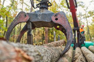 Forwarder mit Forstkran beim Holzrücken