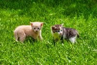 Two Kittens Standing in the Grass