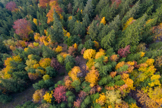 Aerial view over forest in autumn in austria