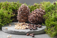 Pine cones and nuts. Composition with moss on a gray concrete background.