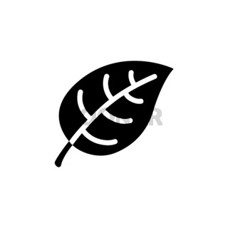 Leaf. Isolated icon. Nature and fall vector illustration